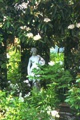 Weißer Garten kamelien weißer garten duftpflanzen gartenberatung bücher